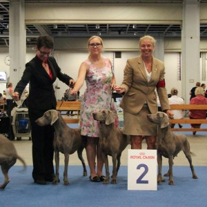 2nd place in breeder-class at the World Winner Show in Helsinki 2014. J Scuba´s Number One Hundred, Scuba´s Millionaire Cocktail, J SeUCH SeJCH Scuba´s Kiss The Boys Goodbye.